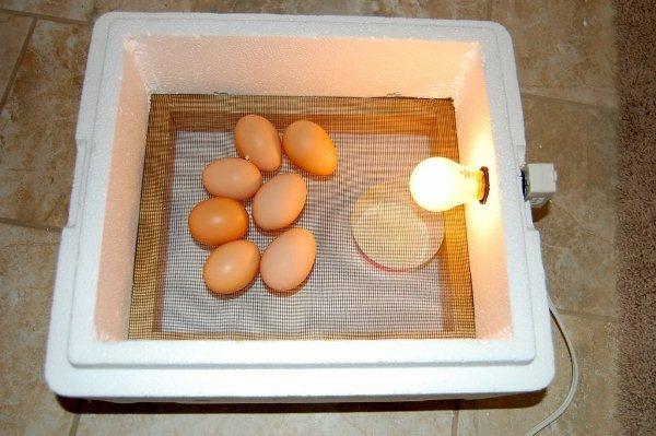 Инкубатор для яиц из пенопласта