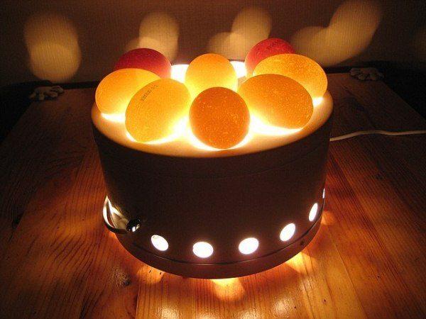 яйца просвечиваются на овоскопе