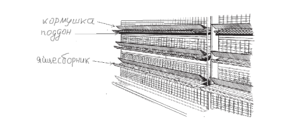 схема установки клеток в курятнике стеллажами