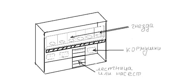 схематическое расположение насеста, кормушек и гнёзд в вольере-курятнике
