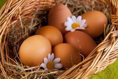 снесённые курами яйца