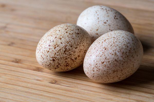 яйца индюка