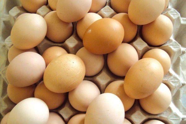 яйценосткость породы