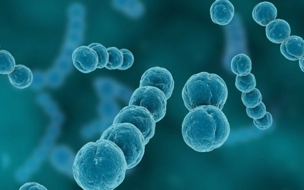 Бактерия стрептококк
