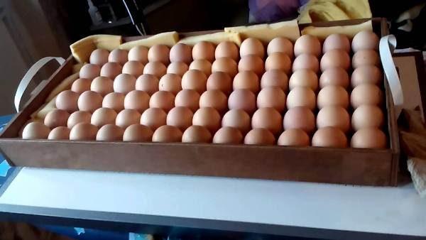 Яйца для закладки в инкубатор Блиц