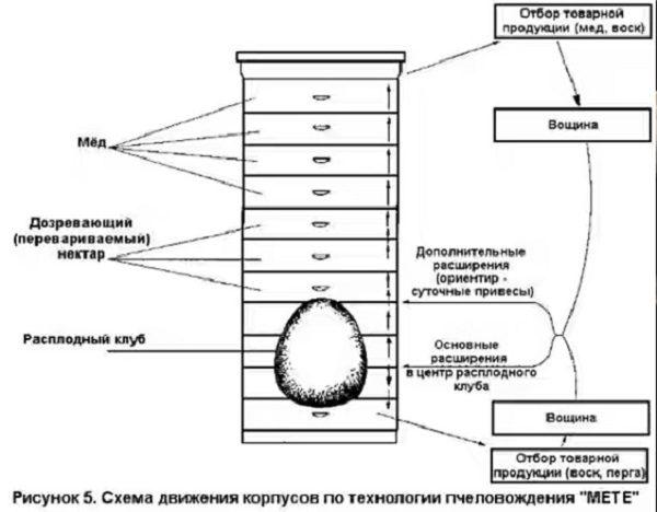 Схема движения корпусов по технологии пчеловождения МЕТЕ