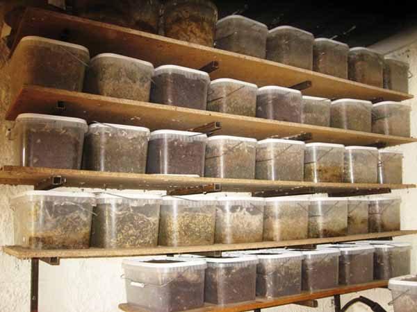 Хранение личинок восковой моли