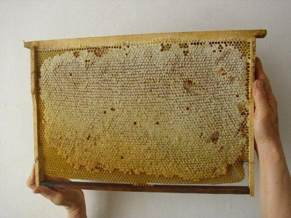 Рамка с печатным мёдом