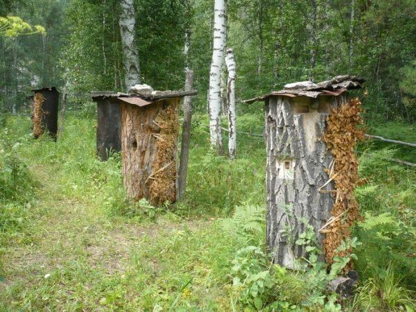 Бортевой или дикий мед с привкусом дыма