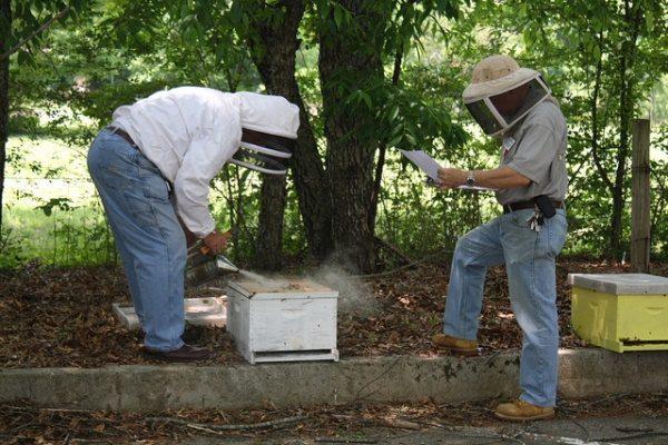 Пчеловоды на пасеке с дымарём