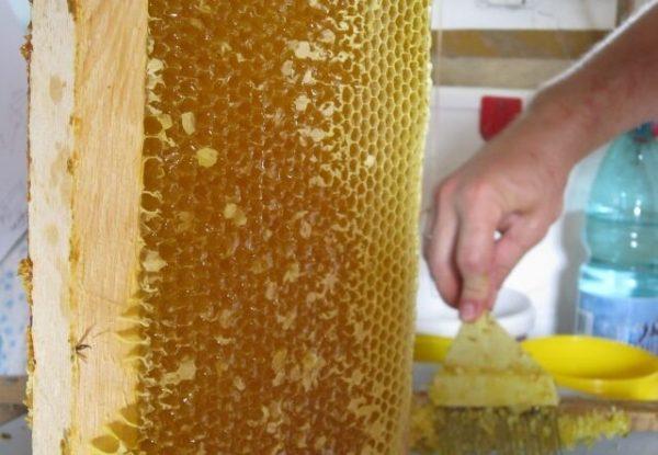 Кориандровый мёд в сотах