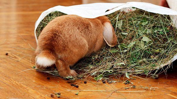 Кролик, залезший в мешок