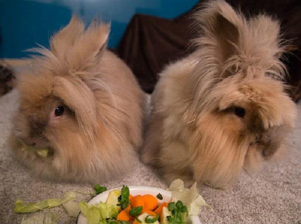 Искусственное кормление новорождённых крольчат. Кролики 83