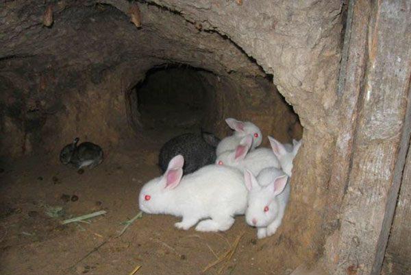 Маленькие кролики в яме