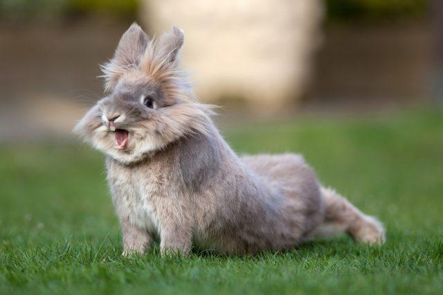 Ринит у кроликов: симптомы, лечение и профилактика