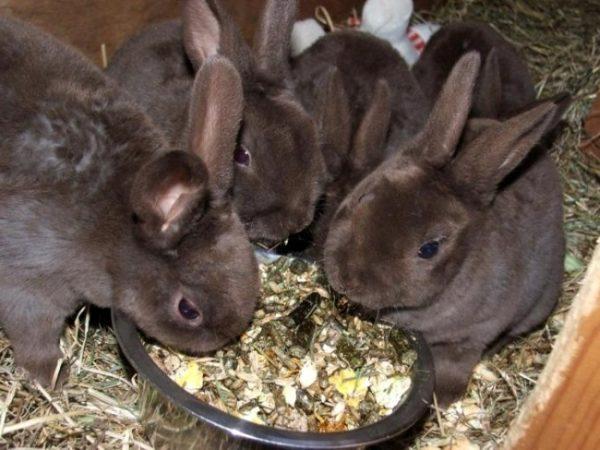 Комбикорм для кроликов: как приготовить в домашних условиях?