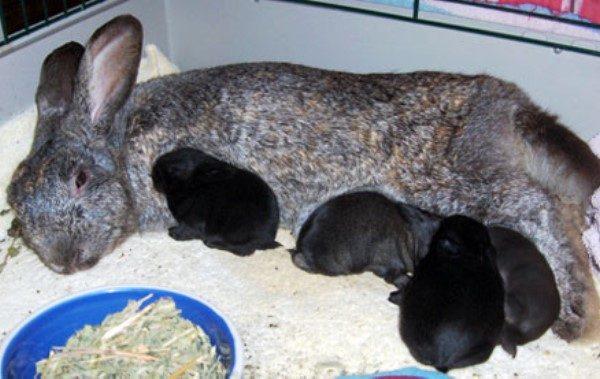 Крольчиха и маленькие крольчата