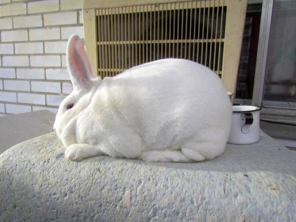 Для избавления от насморка кролику проводят ингаляции