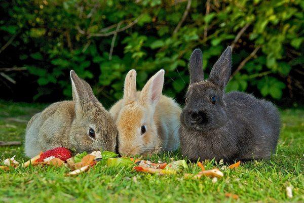 Летнее кормление кроликов на лужайке