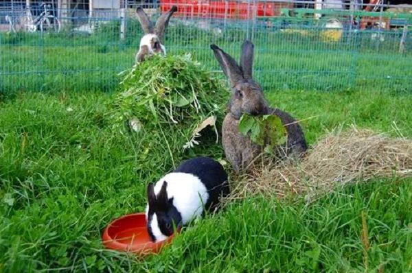 Заготовленный грубый корм для кроликов.