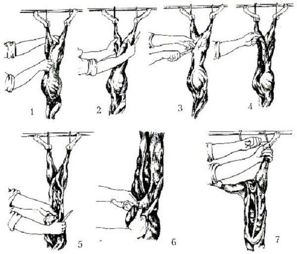 Схема разделки тушки кролика