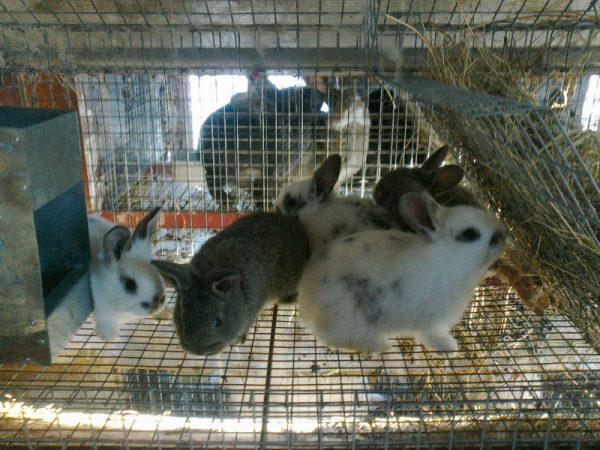 Маленькие кролики в клетке