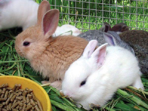 Подготовленный комбикорм для кроликов