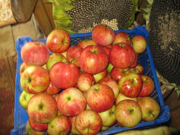 Яблоки сорта Штрифель в ящике