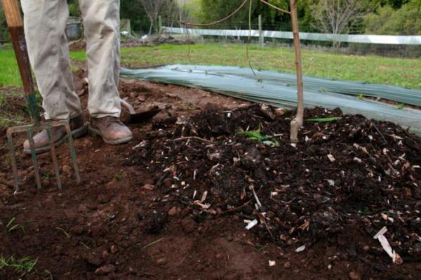 Подкормка калийно-фосфорными удобрениями для яблонь