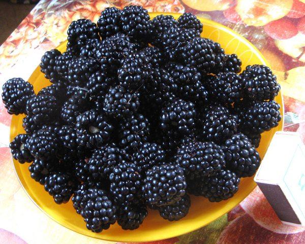 Урожай черной малины