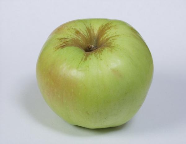 """Основные вредители яблони сорта """"Богатырь"""" - плодожорка, тля и боярышница"""