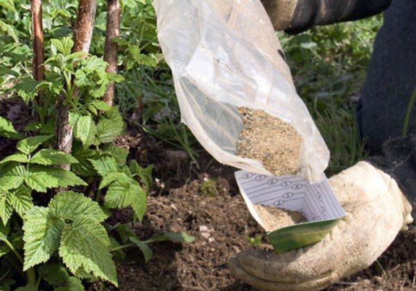 Внесение минеральных удобрений под куст малины