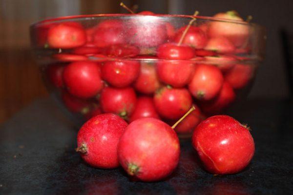Урожай красных, спелых ранеток
