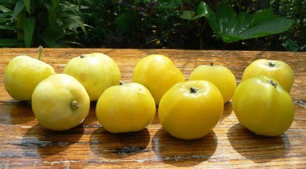 """Урожай желтых яблок яблони """"Китайка золотая"""""""