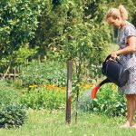 Летом яблони необходимо обильно поливать