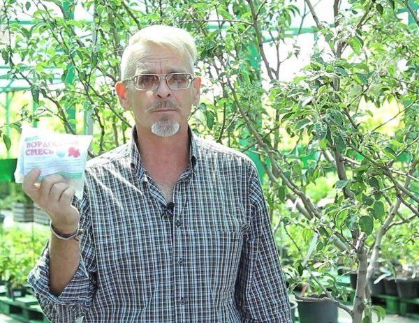 Применение химических смесей для опрыскивания зараженных деревьев