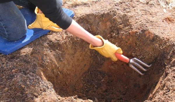 Подготовка ямы для посадки сливы