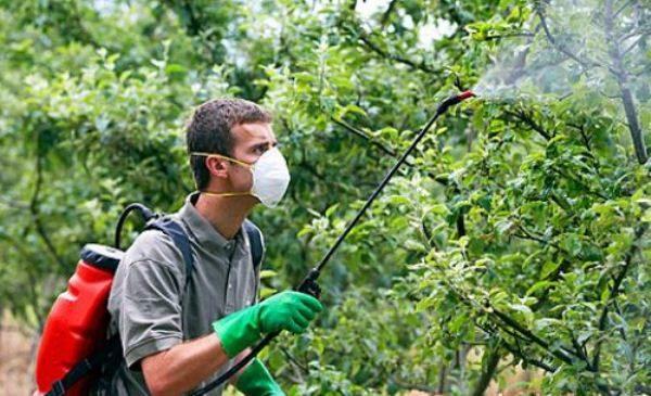 Обработка яблонь химическими и биологическими средствами