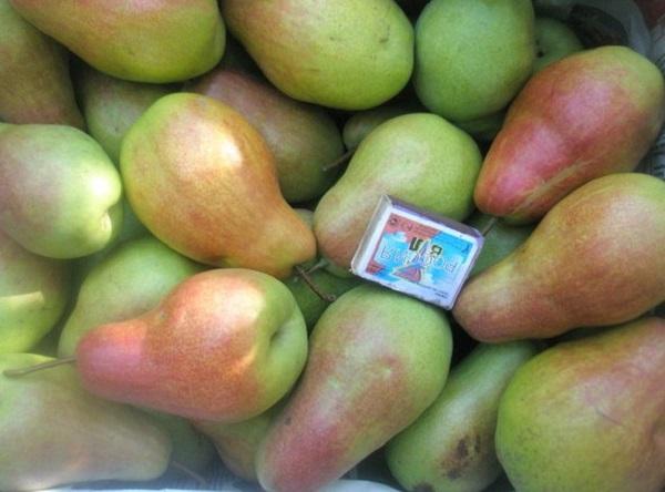 Урожай и размеры груши Лесная красавица