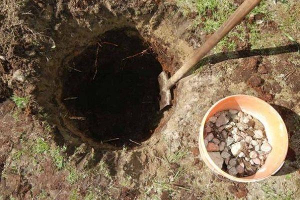 Выкапывание ямы под посадку груши