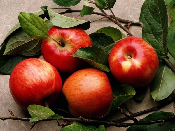 Яблоня - самое распространенное дерево на земле, каждый из сортов ценен своим составом