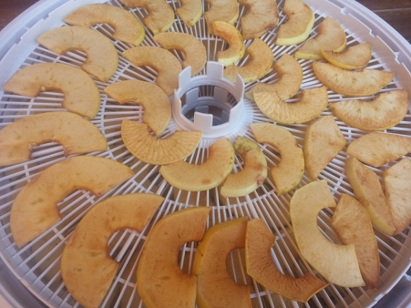 В электросушилке можно засушить большое количество яблок за короткий срок
