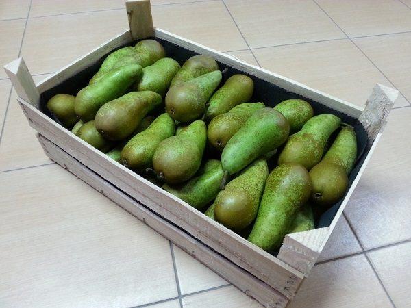 Урожай свежих груш Конференция
