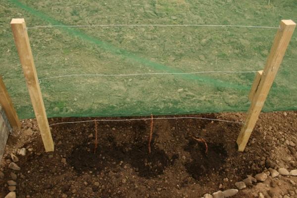 Для посадки малины выбирайте солнечное место с плодородной почвой