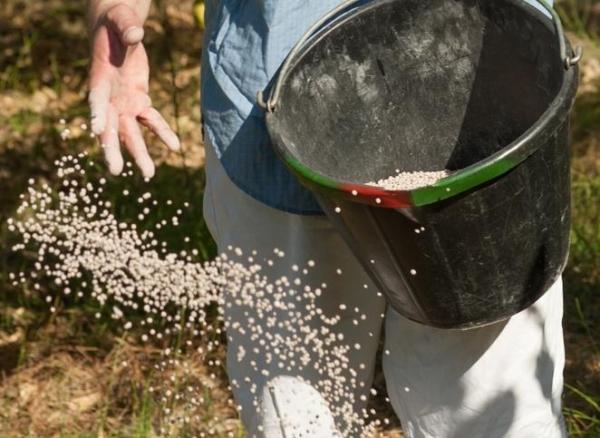 Грушу сорта Любимица Клаппа подкармливают фосфорно-калийными и азотистыми удобрениями