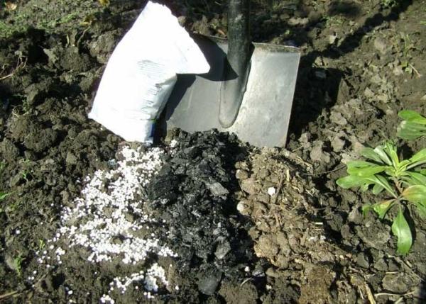 Груша нуждается в удобрениях: азот, карбид, мочевина, калий, фосфор, суперфосфат