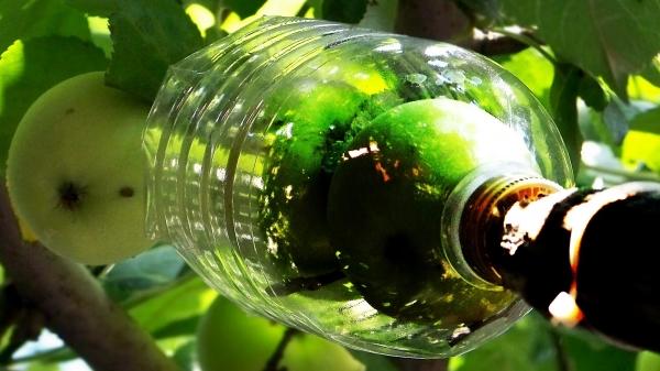 Чтобы изготовить плодосборник для яблок, понадобится двухлитровая пластиковая бутылка