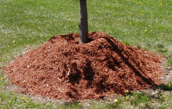Мульчирование способствует насыщению почвы и корневой системы кислородом