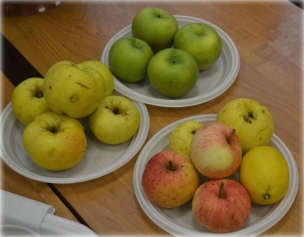 Калорийность яблок зависит от их сорта, размера плодов и способа заготовки