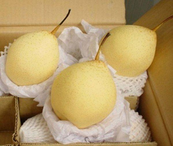 Недозревшую китайскую грушу заматывают в бумагу